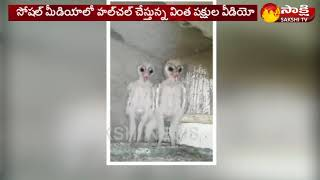 Rare Birds similar to Aliens, video going viral on Social ..