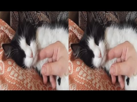 Lazy CAT 3D ! Cat Rest ! 3D VIDEO