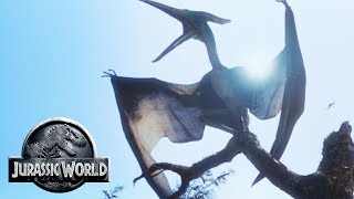 The Different Pteranodons of Jurassic World - Jurassic Park Birdcage - Jurassic World Pteranodon
