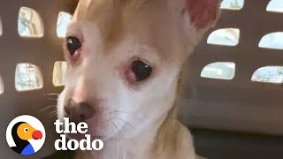 Dog Who Tried To Bite Everyone Becomes A Snugglebug | The Dodo Foster Diaries