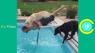 /try not to laugh watching funny animal fails compilation november 2018 1 co vines