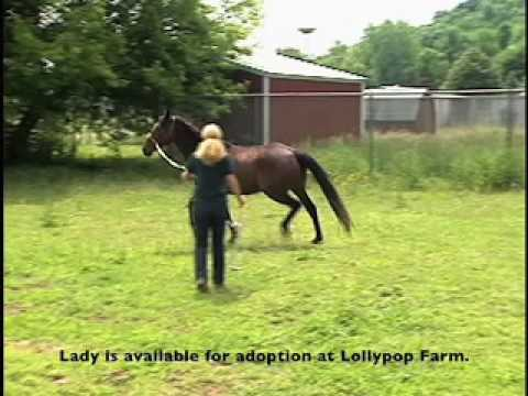 Meet Lady - Lollypop Farm Adoptable Horse