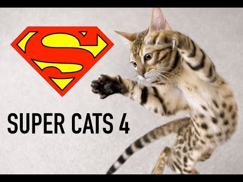 Super Cats, Cats jumping around