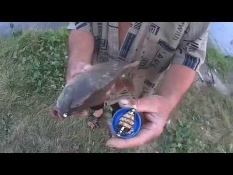 китайская прикормка для рыбы