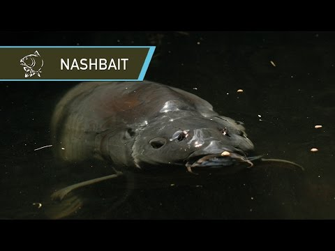 Puść film NASHBAIT - THE HISTORY OF CARP FISHING BAIT