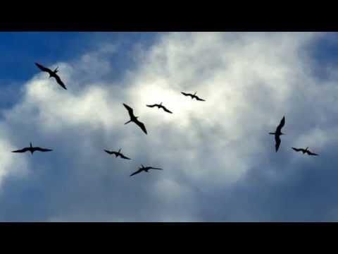 Baixar Som de chuva com canto de pássaros, para relaxar e dormir