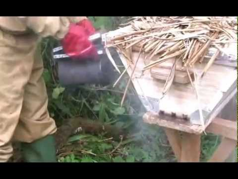 Bees and Trees Project in Nkor, Cameroon - Introduction