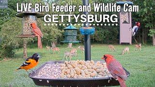 LIVE Bird Feeder Cam - Gettysburg PA (over 30 species identified)
