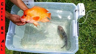 FISH BATTLE in Plastic Tub!