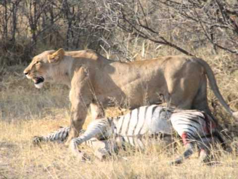 Lightfoot Loves: Botswana