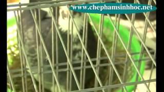 [chephamsinhhoc.net]  Đệm lót lên men sinh học trong trang trại chăn nuôi bồ câu pháp