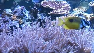 Relajación en aquariums