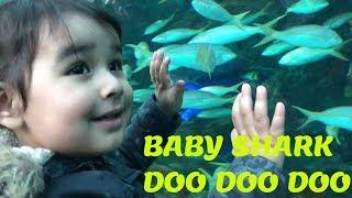 Baby Shark | Do Do Do | Sifat Visit To Toronto Aquarium | Kids Video | Nursery Rhymes