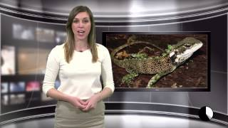 Midday Minute, April 7: Endangered Columbia River, dragon lizard and teens suing state
