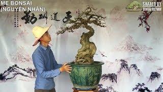 10 tác phẩm Bonsai Việt được giới thiệu tháng 04-2018