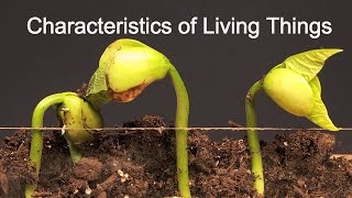 Characteristics of Living Things-What makes something alive?