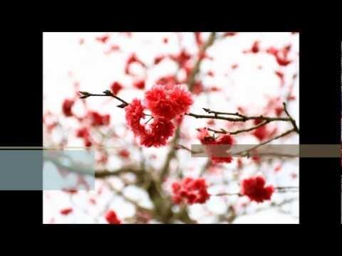 Xin Nian Hui Jia 新年回家 - 謝佳見 Arlene Cover [Me Singing]