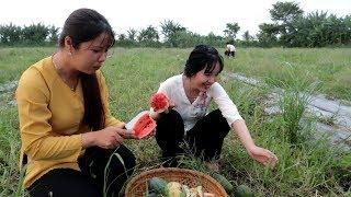 Đi mót Dưa Hấu ăn ngay tại chỗ ngon ơi là ngon | Thôn Nữ Miền Tây