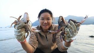 小漁趕海抓螃蟹,今天算是來對地方了,在這抓了好幾隻大螃蟹【漁小仙】