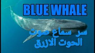 شاهد هل صوت الحوت الازرق من علامات الساعة غزة تايم Gaza Time