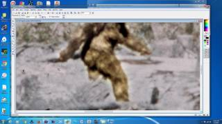M.K.Davis discusses the Incredible detail in frame 352 from the Patterson Bigfoot film.