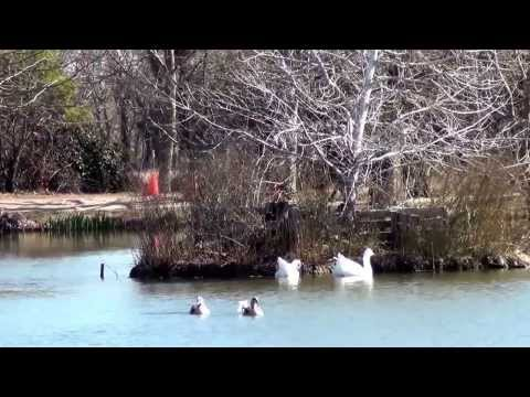 Vídeo Boda celebrada en febrero de 2014. Yeguada Senillosa