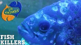 Top 10 Fish Killers, 10 Most Common Fish Keeping Diseases, 10 Things