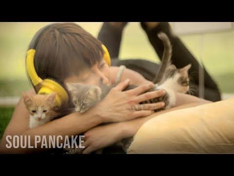 Анти-стрес терапија со мачиња