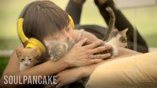 Anti stres terapija mačkama!