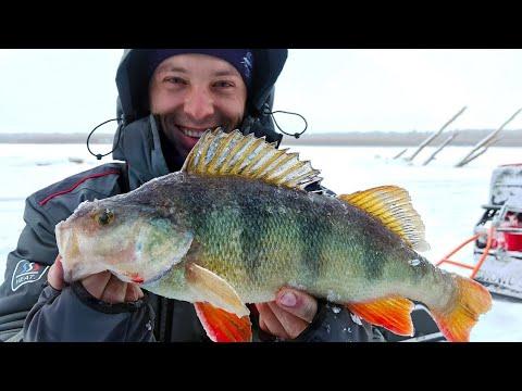 Дикие поклевки КИЛОГРАММОВЫХ ОКУНЕЙ! Зимняя рыбалка с ночевкой в комфорте. Вот это жор!