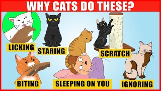 The Meaning Behind 14 Strangest Cat Behaviors | Jaw-Dropping Facts about Cats