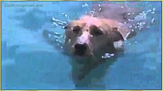 Chú chó bị cá mập tấn công