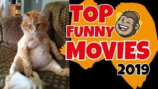 The best and funny cats video compilation (So absurd, funny and charming) roliga katter