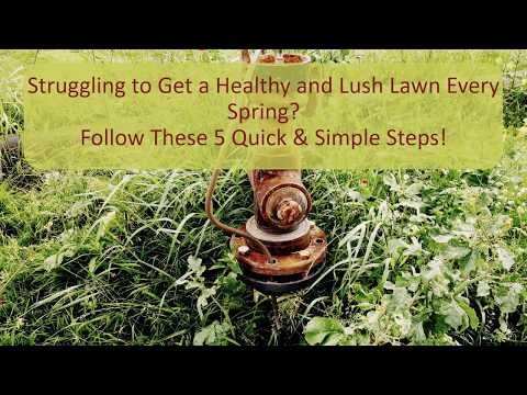 5 Tips to Prepare Your Lawn for Spring