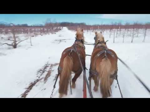Apple Holler Horse drawn sleigh ride