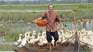 Hài Hoài Linh, Việt Hương, Nhật Cường - Du Học - Hài Kịch Cười Sặc Cơm Mới Nhất 2018