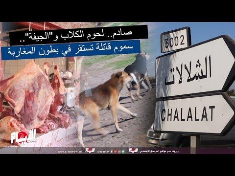 """صادم.. لحوم الكلاب و""""الجيفة"""".. سموم قاتلة تستقر في بطون المغاربة"""