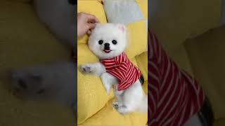 Funniest Confused Pets Compilation