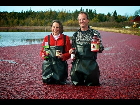 Terra Beata Cranberry Farm - 2013 Prestige Award Winner