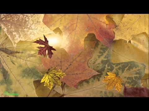 Золотая осень Андрей Жайворонков