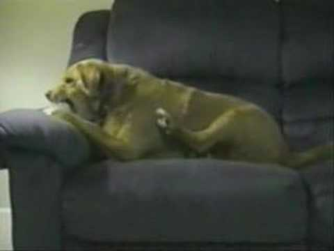 Куче се напаѓа само себе