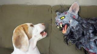 Cute Dog vs. Zombie Cat: Cute Dogs Maymo & Penny