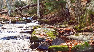 4K River Forest 🌲 Relaxing River Sleep Sounds (8D Audio) 🌲 Mountain Ambience Meditation 432hz