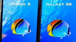 iPhone X vs Samsung Galaxy S8 Display - Which is Better?