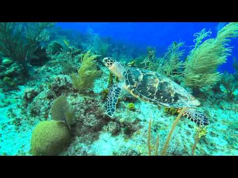 The Cayman Islands for New Divers