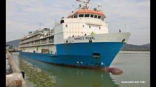 Tàu Nghìn Tấn Barkly Pearl Chở Bò Từ Úc Cập Cảng Cửa Lò