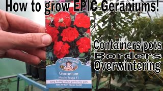 How to grow Epic Geraniums! Variety Moulin Rouge F1!