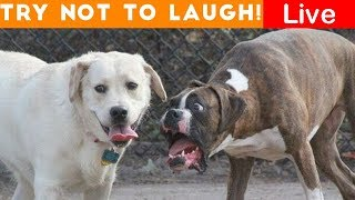 Try Not To Laugh At This Ultimate Funny Dog Video Compilation | Live Streaming funnyandjokesful