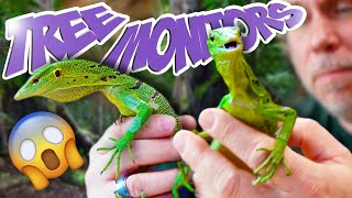 UNBOXING GREEN TREE MONITORS!! FOR MY REPTILE ZOO!! | BRIAN BARCZYK