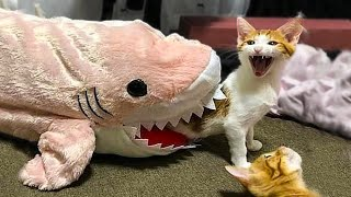 👍 Best Funny Cats 😹 And Dogs 🐶 Of The Month - Try Not To Laugh
